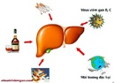 Tp. Hồ Chí Minh: Cách thải độc gan trị mụn tốt nhất CL1698778