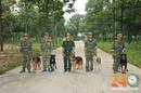 Tp. Hồ Chí Minh: Huấn Luyện Chó Nghiệp Vụ Quân Khuyển Dĩ An bình dương CL1698832