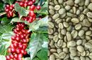 Tp. Hồ Chí Minh: Dùng thử cà phê chồn miễn phí tại hệ thống cửa hàng của Công ty CP cà phê nguyên CL1700893