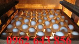 Địa chỉ bán máy ấp trứng mini 200 quả đảo tự động giá rẻ nhất