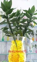 Tp. Hồ Chí Minh: Bán Đất Sinh Học, màu- Dùng Trồng cây ở cơ quan, trong nhà tiện lợi, sạch đẹp CL1700596