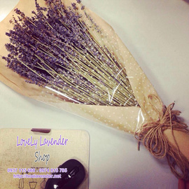 Bán sỉ và lẻ Hoa lavender khô nhập khẩu tại TPHCM giá rẻ