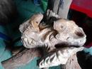 Tp. Hồ Chí Minh: tượng gỗ xá xị thơm song ngư nhả ngọc CAT236_239