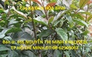 Tp. Hồ Chí Minh: Cây Xạ Đen HB-=- Phòng và chữa bệnh Ung thư, hiệu quả ,giá rẻ CL1701601