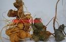 Tp. Hồ Chí Minh: Sâm Ngọc Linh-=*=-Bồi bổ, tăng đề kháng tốt- phòng bệnh, làm quà biếu CL1702214