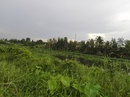 Tp. Hồ Chí Minh: Bán đất thổ cư ven sông Sài Gòn tại Phường Thạnh Lộc Quận 12 CL1702862