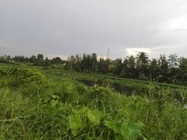 Bán đất thổ cư ven sông Sài Gòn tại Phường Thạnh Lộc Quận 12