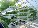 Tp. Hà Nội: Tư vấn miễn phí hệ thống trồng rau thủy canh CL1702295
