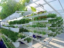 Tư vấn miễn phí hệ thống trồng rau thủy canh