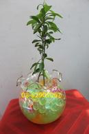 Tp. Hồ Chí Minh: Bán Đất Sinh Học, nhềumàu-*-Giúp Trồng cây ở cơ quan, trong nhà tiện lợi, sạch đẹp CL1702683
