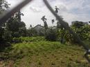 Tp. Hồ Chí Minh: Đất Bán SH Riêng Khu Dự Án Nhà Phố Đường Tô ngọc vân, P. Thạnh xuân CL1700499