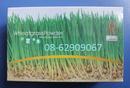 Tp. Hồ Chí Minh: Có bán Tiểu Mạch Thảo, loại 1=--Bồi bổ, tăng đề kháng, tốt cho cơ thể CL1702916