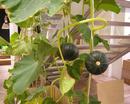 Tp. Hà Nội: 5 loại trái cây giúp da bạn như da em bé CL1703037
