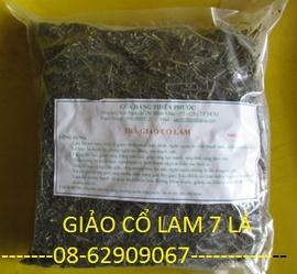 Giảo cổ Lam 7Lá, - giảm mỡ, ổn huýet áp, giàm cholesterol
