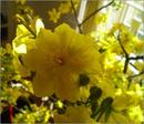 Bí quyết giữ hoa tươi ngày tết RSN9829