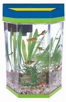 Chọn hình dáng bể cá thu hút tài lộc NEWS3772