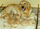 Kinh nghiệm chọn chó đối với người mới nuôi RSN7381