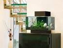 Một số lưu ý khi đặt bể cá trong văn phòng NEWS10243