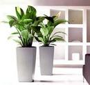 Bố trí cây xanh trong nhà để thu hút vận may, tài lộc NEWS7231