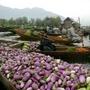[8] Còn đây là khu chợ nổi trên hồ Dal của Ấn Độ.