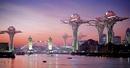 City in the sky: Thành phố hoa sen trên không RSN21200