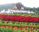 Lễ hội hoa Chiang Mai NEWS10398