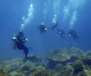 Sự sống trong lòng biển Sơn Trà NEWS15960