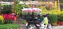 Sắc màu chợ hoa Tết RSN9829