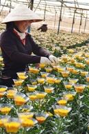 Ba làng hoa nổi tiếng Đà Lạt RSN21200