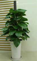 Lưu ý phong thủy khi trồng hoa trong nhà NEWS18850