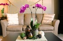 5 loại hoa ý nghĩa bạn nên bày trong dịp Tết RSN9829