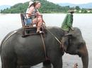 Đắk Lắk báo động nguy cơ hết voi trong 20 năm tới NCAT16_24